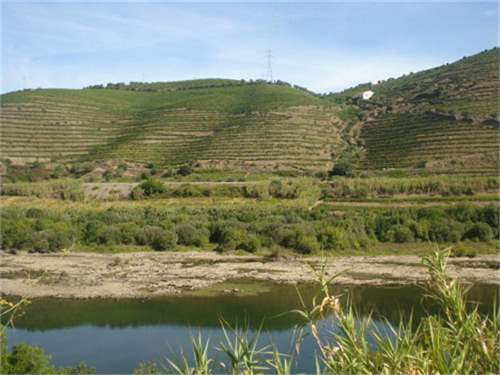 Portuguese Real Estate #6282237 - £1,201,650 - Vineyard
