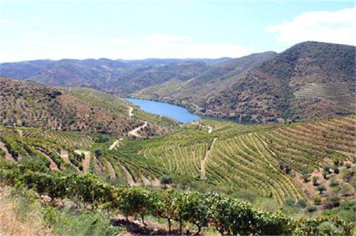 Farm with wine production in Douro_img_2