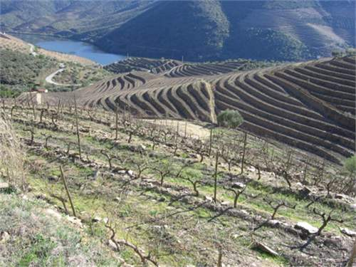 Farm with wine production in Douro_img_3
