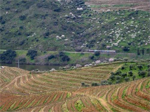Farm with wine production in Douro_img_4