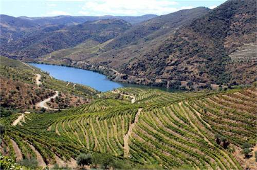 Farm with wine production in Douro