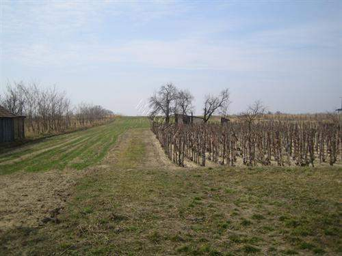 Hungarian Real Estate #5560671 - £5,586 - Building Plot