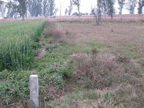 # 3722986 - £183,870 - Development Land, Rajpura, Punjab, India